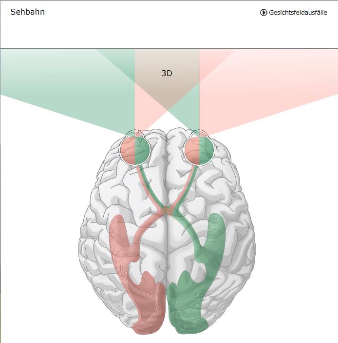 Nervus opticus (II, Hirnnerv) || Med-koM